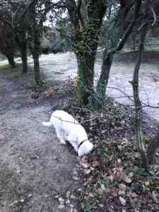 Emy à la chasse aux truffes