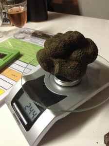 Pesée d'une truffe impressionnante