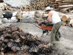 DSC06917- coeurs d'agaves brulés - Santiago Mazatlan