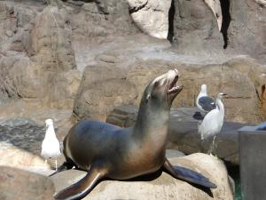 @lisegiguere - Admirer les lions de mer