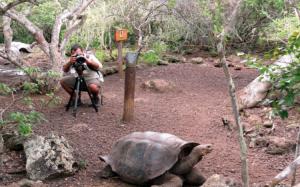 @lisegiguere - Les fascinantes tortues géantes des Galapagos