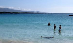 @lisegiguere - Se baigner en compagnie des liions de mer