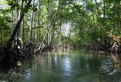 @lisegiguere - En zodiac dans une forêt de mangroves de l'Archipel Mergui, Myanmar